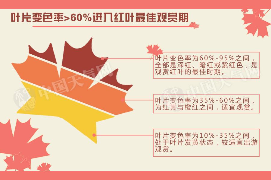 """2010年开始,北京气象台发布了""""红叶指数"""",共分为三级,指数越高表示越适宜观赏红叶。其中,当叶片变色率达到60%-95%时,是观赏红叶的最佳时期。"""