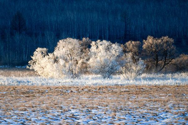 一路向北 去呼伦贝尔体验雪的纯白