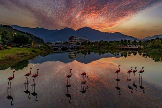 福州晚霞与白云完美交织 天空美如画