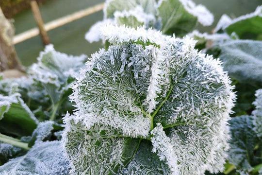 浙江丽水最低温跌破冰点 随处可见冰霜如银