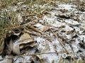 今天(12日),是春节长假后的第二个工作日,河北保定等地飘雪,给交通出行带来一定不利影响。图片拍摄于河北保定蠡县。(图文/刘东兴)