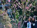 福州春光明媚 花开春来早