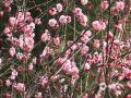 3月6日,河南驻马店市气温回升,春光明媚,新世纪广场内的梅花绽放、小动物也纷纷苏醒出来活动,渐有春的萌动,万物复苏的感觉。(图/邓国勇)