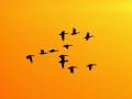 """大批候鸟""""落户""""哈尔滨太阳岛湿地"""