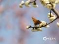 山东济宁杨家河公园。春天温柔的风,惊醒了花儿一冬的梦,伸个懒腰,睁开睡意朦胧的眼睛,悄悄的长出含苞待放的花蕾。不知何时一只蝴蝶,怯怯得来到花的面前,煽动者美丽的翅膀,轻轻的唤着,就在这一瞬间,花儿就这么开放了。(拍摄:王晓默)