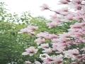 早春时节,武汉的街头巷尾春意盎然,各种初放的花朵正在争奇斗艳,鸟儿在花枝间争相闹春,一派生机勃勃的景象。(拍摄:张丽文)