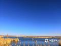 近日,内蒙古鄂尔多斯天朗气清,位于中心城区的东红海子湿地蓝天碧水,芦苇荡漾,景色迷人。随着气温逐渐攀高,大批遗鸥飞抵这里,自由飞翔,成群嬉戏,野鸭则水中悠闲觅食,构成一幅天然和谐的画面。(文图/何晨)