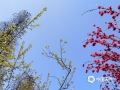 近日衡阳气温回升,暖阳高照,天空蔚蓝,鲜花盛开,市民纷纷来到公园游玩赏花。(李英姿 摄)