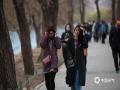 本周末,北京阵风较大、气温偏低。中午12点,颐和园内游客受风寒天气影响明显。(拍摄:王晓)