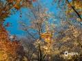 近期湖北武汉东湖樱花盛放,引来全国各地游客前往观赏。为了让游客在夜晚也能观赏到樱花盛开的美景,武汉东湖采用LED冷光源在园区内打造出华中地区仅有的夜间赏樱场所。在灯光的映?#21335;攏?#24594;放的樱花展现出另外?#29615;?#32654;景。(图/范宏飞)