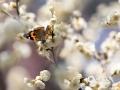 山东?#23194;?#26472;家河公园。春天温柔的风,惊醒了花儿一冬的梦,不知何时一只蝴蝶,怯怯?#32654;吹交?#30340;面前,煽动者美丽的?#23706;潁?#36731;轻的唤着,就在这一瞬间,花儿就这么开放了。(图/王晓默)