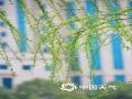 早春时节,武汉的街头巷尾春意盎然,各种初放的花朵正在争奇斗艳,鸟儿在花枝间争相闹春,一派生机勃勃的景象。(图/张丽文)