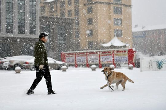 重回冬季!内蒙古呼伦贝尔迎春雪