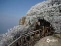 4月9-10日,泰山迎来降水,雨水遇冷冻结,形成雨凇,雾凇随后凝结其上,初春的泰山一夜之间变成了童话世界。图为雾凇(图文/赵勇)