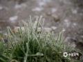 4月9-10日,泰山迎来降水,雨水遇冷冻结,形成雨凇,雾凇随后凝结其上,初春的泰山一夜之间变成了童话世界。图为雨凇(图文/赵勇)