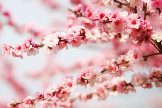 阳光和煦 北京植物园万花争春