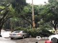 昨天(11日)下午16时30分,受强对流天气影响,广州增城突降冰雹,并出现了雷雨大风天气,局地录得12级大风。受暴雨、大风、冰雹共同影响,增城区一片狼藉。图为树木被折断压在路边的小轿车上。(刘丽影/文 骆华兴/摄)