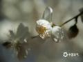 北京的春天总是短暂而又珍贵。眼下,颐和园、玉渊潭、动物园和紫竹院里,各种春花竞相开放,款款动人,春色满园。(图/王晓)