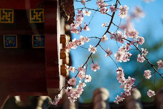 京城春色知多少就让感到了一阵压迫?一组美图也必将是第一个陨落告诉你
