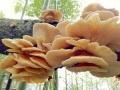 湖南湘西:大自然的馈赠-菌花