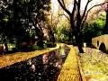 四月的广西柳州,繁花似锦,全城27万株紫荆花绽放,让龙城变成了花的海洋,让无数游客流连忘返。4月14日一场大雨,紫荆花落下一大片,缤纷落花,醉美龙城。(拍摄:覃德勤)