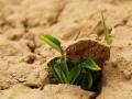 幼芽破土而出 展现生命的力量