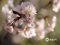 春暖花开,各地春花都在迎春绽放,除了?#39056;?#36523;边常见的桃花、李花、杏花外,我国南北各地还有不同种类的娇艳春花,?#26053;?#23601;来一睹为快。图为山东威海的樱桃花。(图/宋永强)
