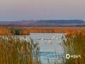 每年四上中旬月,成群的天鹅大群地从我国南方飞向北方度夏,在俄罗斯北方产卵繁殖,海拉尔西山冰湖是天鹅迁徙途中一个必经栖息地。近日,海拉尔西山冰湖上聚集了上千只天鹅等候鸟,画面美不胜收。(图文/李孝荣)