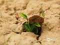泥土中埋藏着生命的种子,这就是春天的力量。(图/杨婧 文/马蕾)