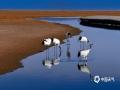 """冬去春来、候鸟北归,扎龙保护区内丹顶鹤野化放飞训练壮观唯美,吸引大批摄影师前来抢拍""""仙鹤衔春""""美景。图片拍摄于4月14日。(图/莫卫东 文/张译阳)"""