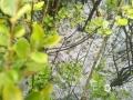 4月25日下午17点30分左右,云南昭通市昭阳区永丰镇突降冰雹和暴雨,并伴有大风、雷电和短时强降水等灾害天气。冰雹最大直径达20毫米,截止18时30分,永丰镇最大雨量为43.4毫米。(文/牛贵成、崔梅琳 图/洪康)