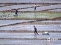 中国天气网讯 5月7日,入夏时节的龙江大地正值水稻插秧期,田间地头一派你追我赶的繁忙景象。火热劳动场景与大大小小形状各异的水田,构成一幅幅诗意盎然的田园风光图。(图/吴胡荼)