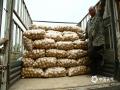 立夏时节,湖北随州黄心土豆大丰收,趁着没下雨,乡亲?#20146;?#32039;收获土豆,打包运输到市场销售。图片拍摄于5月8日(图文/金东善)