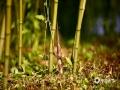 """中国天气网讯 伴随气温升高和适时的降水,北京紫竹院公园的竹笋拱土而出。令人遗憾的是竟出现游人盗采现象。据了解,竹笋的生长速度极快,号称""""十日冲天""""。紫竹院公园种植的竹子品种多为早园竹、紫竹和斑竹。小笋尖尖就是日后的修竹千竿,呼吁游人自觉保护!不要盗采!(图/王晓)"""