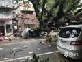 """受台风""""?#34903;瘛?#30340;影响,2018年9月16日,广东多地出现了平均风力11~14级、阵风15~17级的大风,还伴随大暴雨的侵袭。在狂风暴雨的叠加下,多地大树被连根拔起,砸向路边停放的车辆,围栏也有不同程度的损坏。图为17日拍摄的被大树砸中的车辆受毁?#29616;亍#?#30707;?#25300;?摄)"""