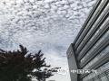 """中国天气网讯 今天(22日),北京天空湛蓝,密布鱼鳞状的云层。据中国天气网气象副首席胡啸介绍,今天北京天空中的云朵学名叫做""""透光高积云"""",云层高度在2000米以上,午后随着气温持续攀升已经逐渐消失。(图/胡啸)"""