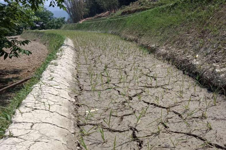 土地干裂水库干涸 一组图片带你了解各地旱情
