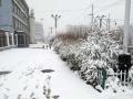 从昨天(26日)夜间开始,青海省玉树、果洛、黄南大部分高海拔地区遭遇了持续的雨夹雪天气过程。天峻、黄南南部地区遭遇了短时积雪,青海省气象台为此连续发布多次暴雪预警信号。从今晨起,青海省大部地区气温持续下降,省会西宁的最高气温只有10摄氏度左右,并下起了雨夹雪,省城周边的山顶上被薄薄的一层白雪覆盖,一夜间青山变为银山。图为海东市化隆县城雪后场景。(图/文 马云龙 赵海梅)