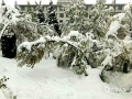 从昨天(26日)夜间开始,青海省玉树、果洛、黄南大部分高海拔地区遭遇了持续的雨夹雪天气过程。天峻、黄南南部地区遭遇了短时积雪,青海省气象台为此连续发布多次暴雪预警信号。从今晨起,青海省大部地区气温持续下降,省会西宁的最高气温只有10摄氏度左右,并下起了雨夹雪,省城周边的山顶上被薄薄的一层白雪覆盖,一夜间青山变为银山。图为降雪过后的互助县气象局院内积雪。(图/文 贺连炳 赵海梅)