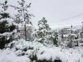 从昨天(26日)夜间开始,青海省玉树、果洛、黄南大部分高海拔地区遭遇了持续的雨夹雪天气过程。天峻、黄南南部地区遭遇了短时积雪,青海省气象台为此连续发布多次暴雪预警信号。从今晨起,青海省大部地区气温持续下降,省会西宁的最高气温只有10摄氏度左右,并下起了雨夹雪,省城周边的山顶上被薄薄的一层白雪覆盖,一夜间青山变为银山。图为海东市互助丹麻乡雪压柏松枝头。(图/文 林长沛 赵海梅)