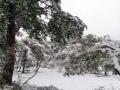 从昨天(26日)夜间开始,青海省玉树、果洛、黄南大部分高海拔地区遭遇了持续的雨夹雪天气过程。天峻、黄南南部地区遭遇了短时积雪,青海省气象台为此连续发布多次暴雪预警信号。从今晨起,青海省大部地区气温持续下降,省会西宁的最高气温只有10摄氏度左右,并下起了雨夹雪,省城周边的山顶上被薄薄的一层白雪覆盖,一夜间青山变为银山。图为降雪过后的西宁湟中县城雪挂枝头。(图/文 李建平 赵海梅)