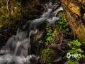 中国天气网讯 哈尔滨东南250公里的凤凰山大峡谷布满溪流,近期绿色翠柏和小花绿草把这里装点成一幅幅美丽画卷。在慢门的拍摄方式下,溪流色彩油润,呈现出云雾缭绕的梦幻世界,给炎热的夏季带来一丝丝清凉。(图文/林松)
