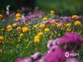中国天气网讯 夏至节气将至,北京植物园里赏夏花。花草树木间,感叹时光荣盛之美。(图/王晓)
