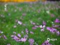 夏至节气将至,北京植物园里赏夏花。花草树木间,感叹时光荣盛之美。(图/王晓)