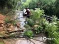 浙江入梅以来受持续强降雨影响,17日08时至21日08时,全省平均雨量84毫米,共有42个县(市、区)超过100毫米,其中长兴199毫米、桐庐192毫米、南浔177毫米。受此影响,6月19日杭州桐庐多地出现不同程度的滑坡、落石、塌方、泥石流等灾害。图为桐庐各地强降雨造成树木严重倒伏。(图/浙江省气象安全技术中心)