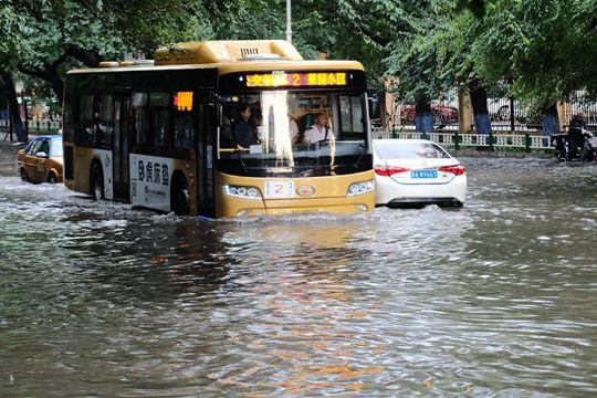 哈尔滨遭遇强风雨 行车如行船大树被折断