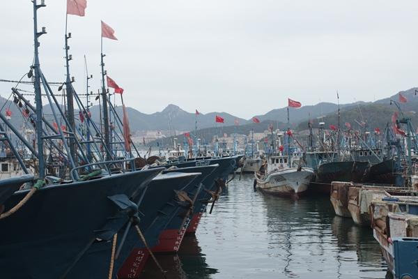 """臺風""""利奇馬""""逼近山東 威海漁船回港避風"""