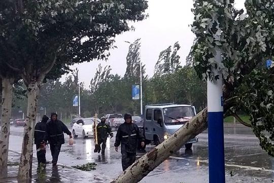 """台风""""利奇马""""携风雨来袭 辽宁大树倒伏河水暴涨"""