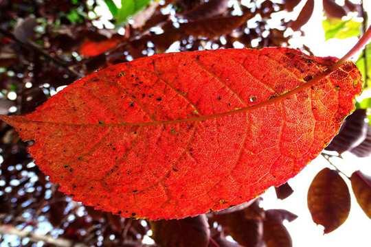 哈尔滨秋意渐浓 斑斓叶色尽显北国风光