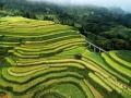 广西河池凤山县:又到一年稻陇黄